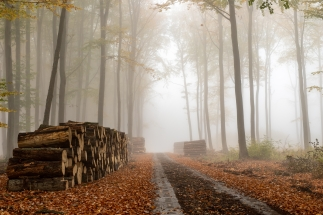 A local road in a deciduous misty forest. A pile of wood prepare